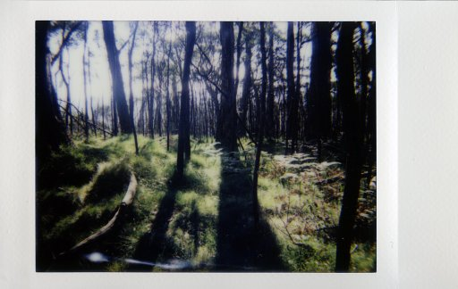 Nature-tripping with the Lomo'Instant Automat