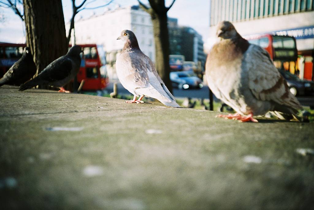 The Dogs, Squirrels and Pigeons of Hyde Park