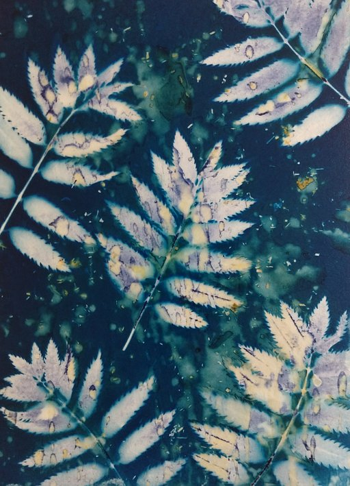 Speck of Stardust: Mandy Kerr's Wet Cyanotypes