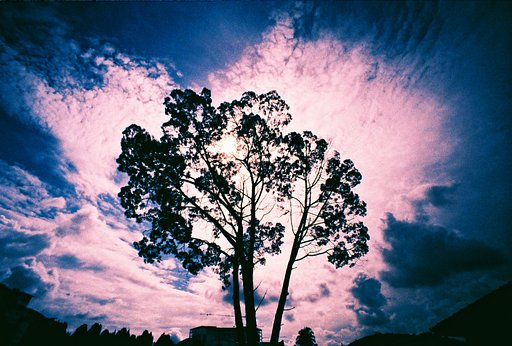 The 60 Most Popular Lomo LC-Wide Shots