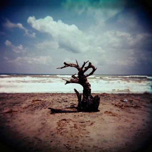 My Relationship with the Humble Holga