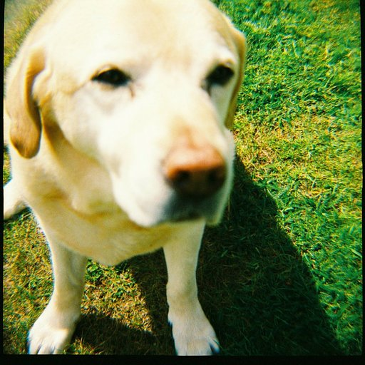 Pet Portraits: The Cutest Reason to Go Analogue!