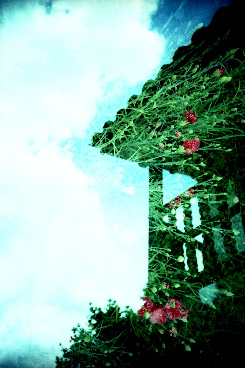 Doubles with Flowers: Lomo LC-A and Diana Mini