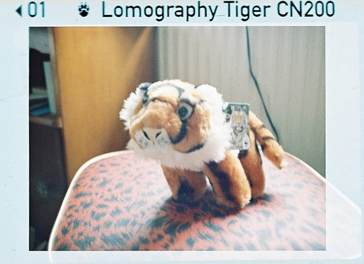 Lomography Colour Tiger 110 – A Quietly Strong Film For All Conditions