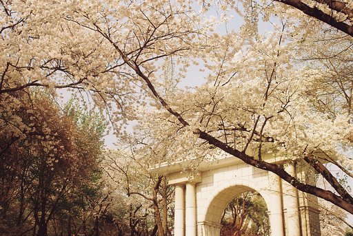 Kyunghee University, the Most Beautiful Campus in Korea