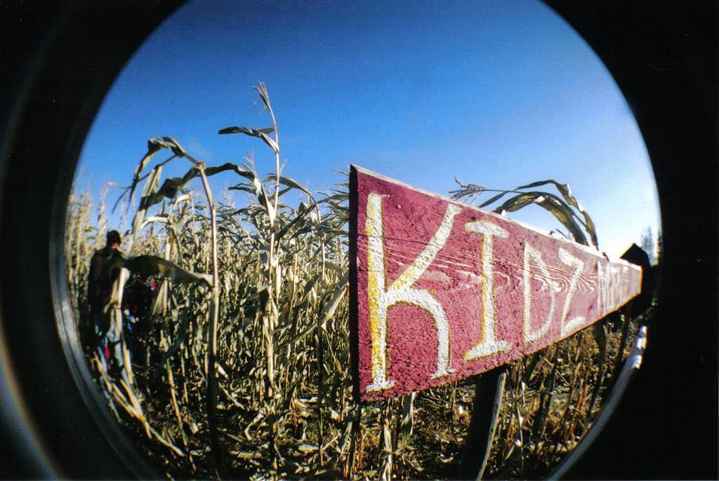 Corn mazes and Pumpkin Cannons! (Bon Accord)