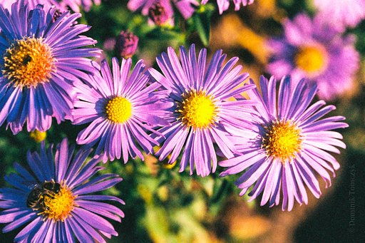 Colorful pictures of flowers in various places and gardens (2018)