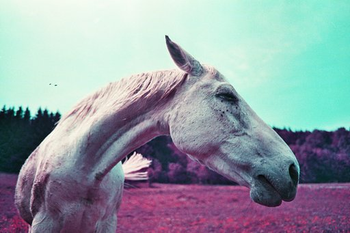 Still Surreal: Snapshots with the New and Improved LomoChrome Purple Film