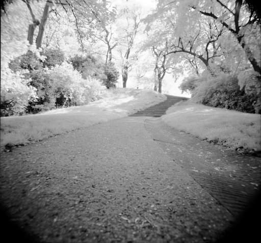 Reviewing the Rollei Infrared 120 ISO 400