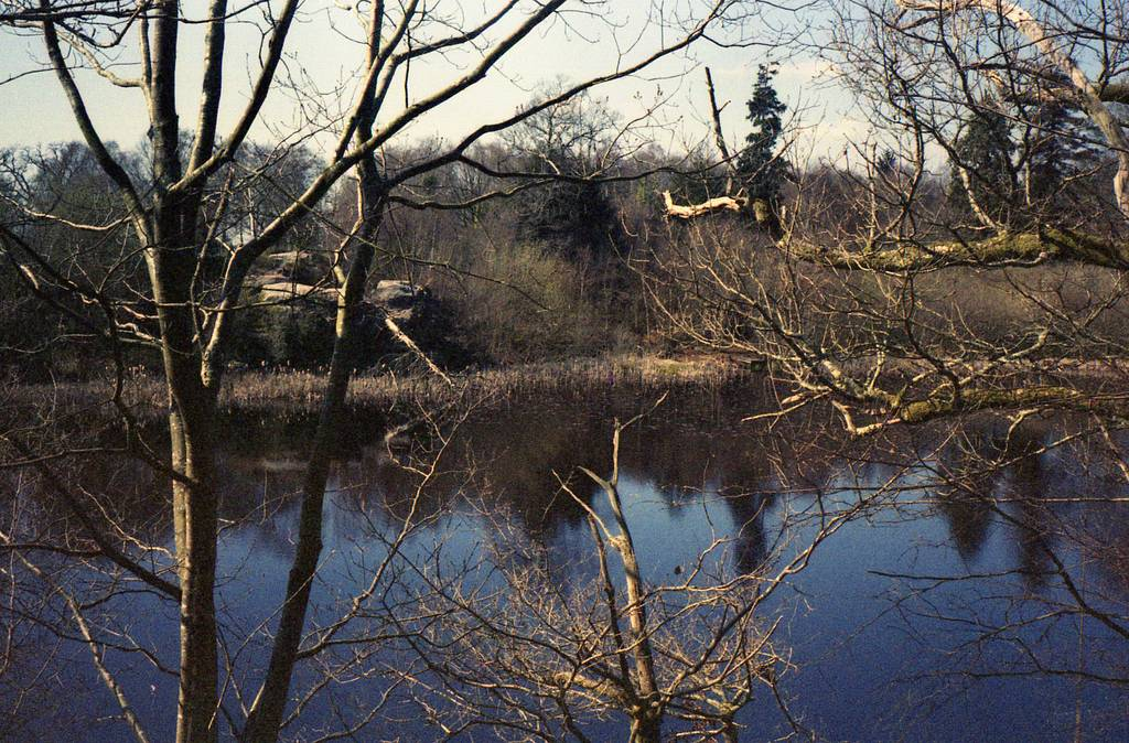 Escape the City and to the Hidden World of Lake Wood, Uckfield