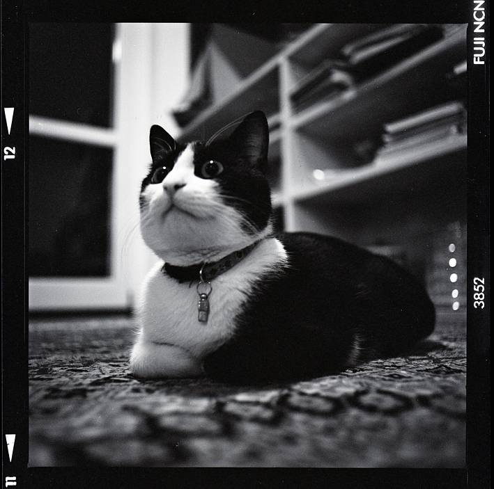 Cats and Dogs in Monochrome
