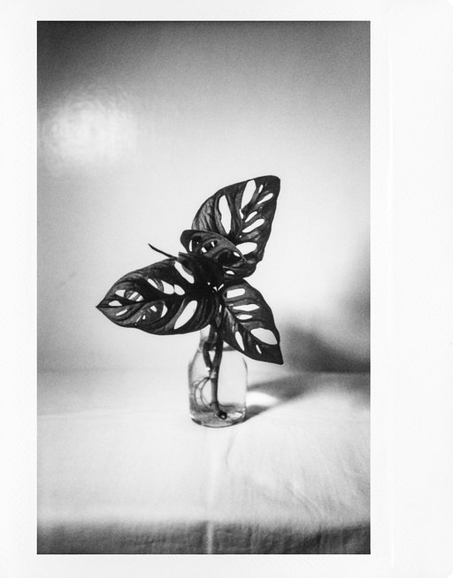 Timothy Ditzler's Instant Still Life With the Lomograflok Instant Back