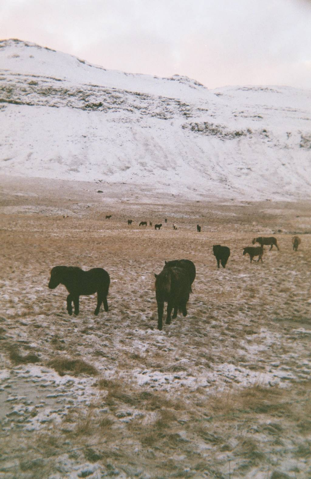 Iceland Landscapes Taken with Lomography Films by Nicoló Strano aka Wume