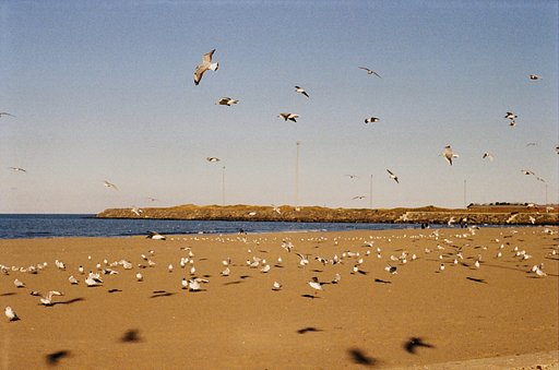 Around the World in Analogue: Golden and Modern Samsun