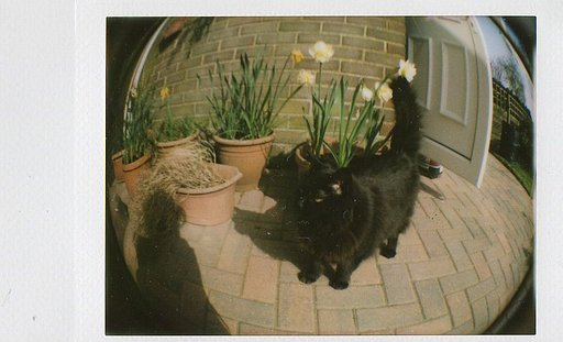 First Blog: Life with Lomo