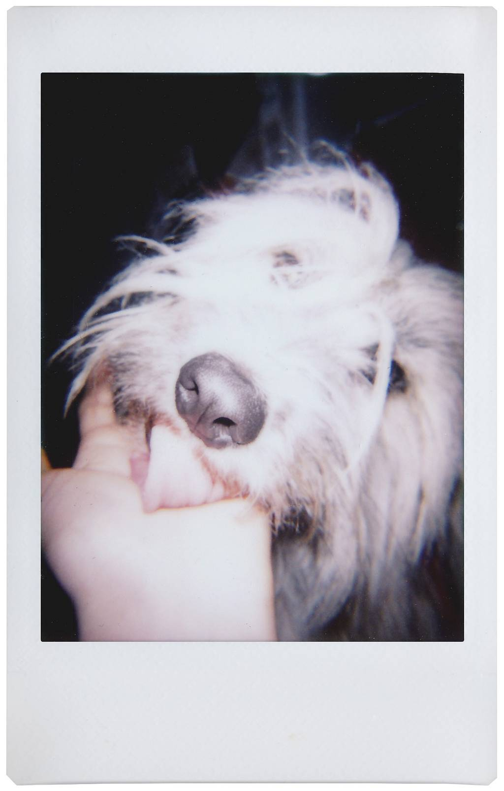 The Lomo'Instant Barks & Laughs