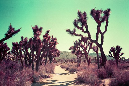 Purple Places: Experimentelle Reisefotos von Nick Collingwood