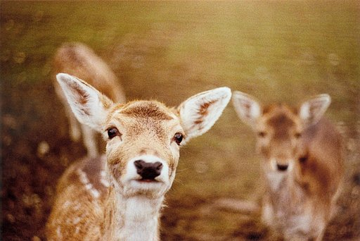 Object of my Affection: Deer of Every Kind!