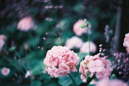 Floral Fantasies with Lomography Art Lenses