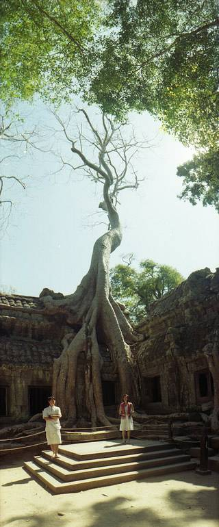 Ta Prohm: Amazing Roots and Trees