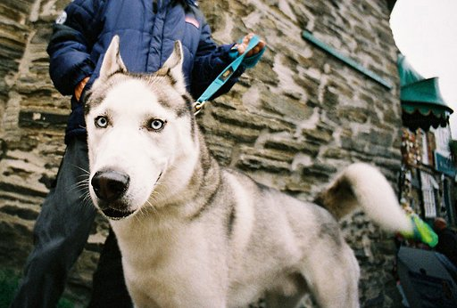 Adorable Pet Portraits Taken Using the Lomo LC-Wide