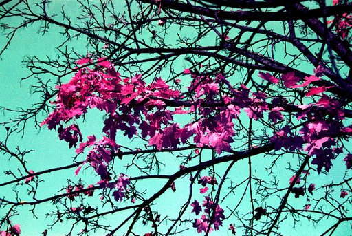 LomoChrome Purple - Una Color Negative che Produce Effetti Simili alle Infrarossi!
