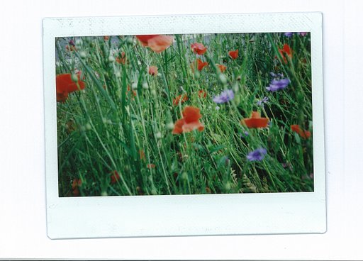 Fuji instax Wide: The Impressive Instant Film