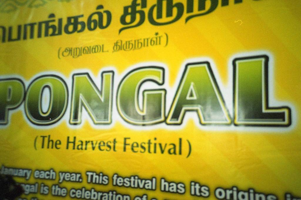 Holiday Traditions: Pongal Festival