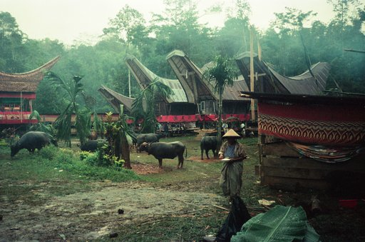 Photo Stories: Unforgettable Toraja, 1993 by hervinsyah