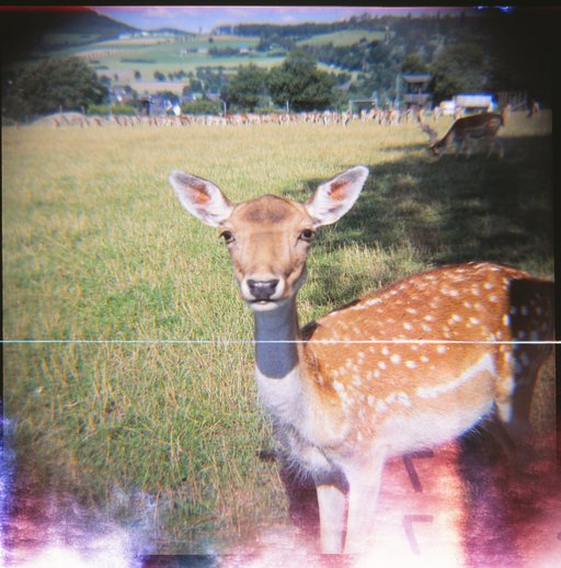 Charming exposure errors part 2: the thick Diana roll