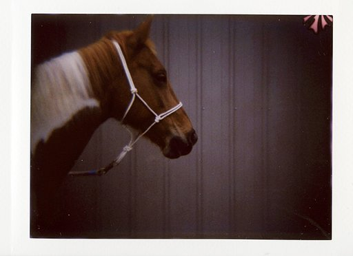 Tanya Braganti Shoots with the Diana F+