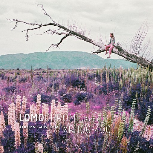 Color your world purple with the LomoChrome Purple 2019 in 35 mm!