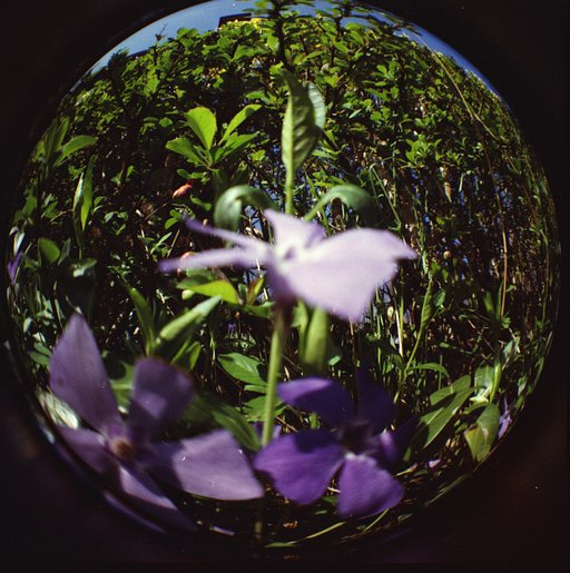 Taking Your Fisheye Outdoors