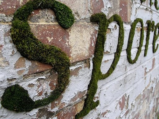 Graffiti With This Funky Moss Mixture!