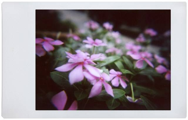 Up Close and Personal Instant Snaps with the Lomo' Instant