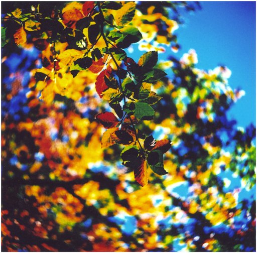 The Director's LomoKino Showreel: The Colors of Autumn