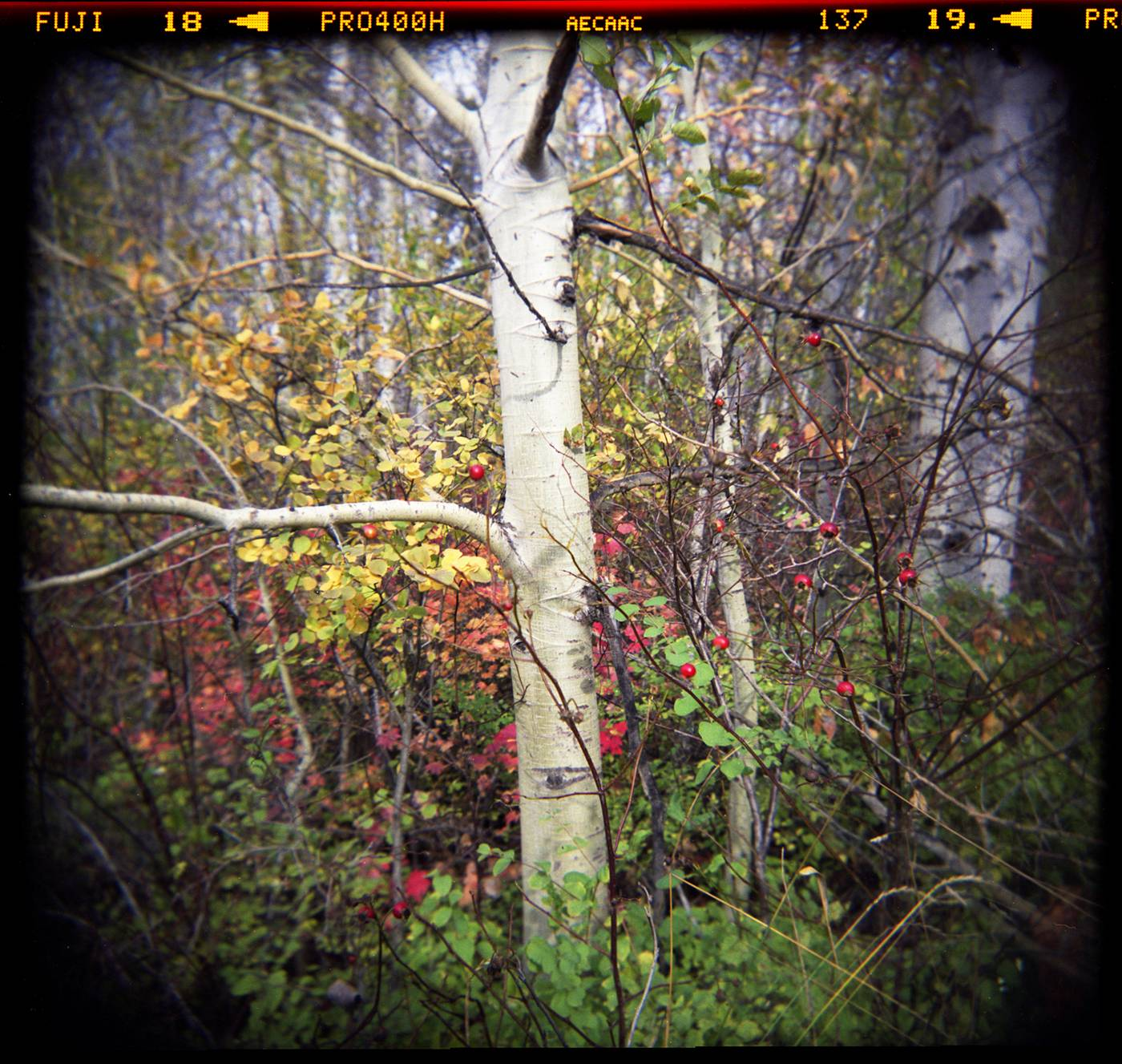 Landscape Photography With A Holga · Lomography
