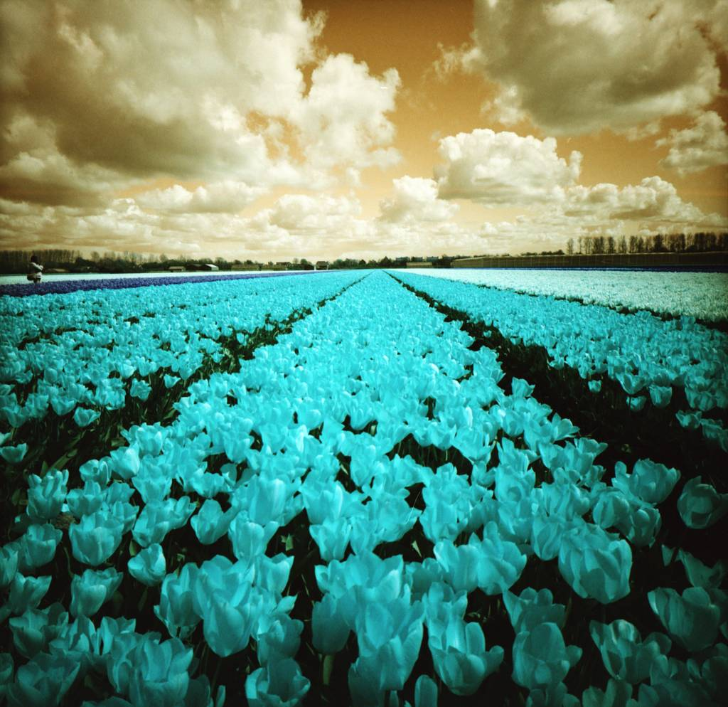Painting on Nature with the LomoChrome Turquoise XR 120