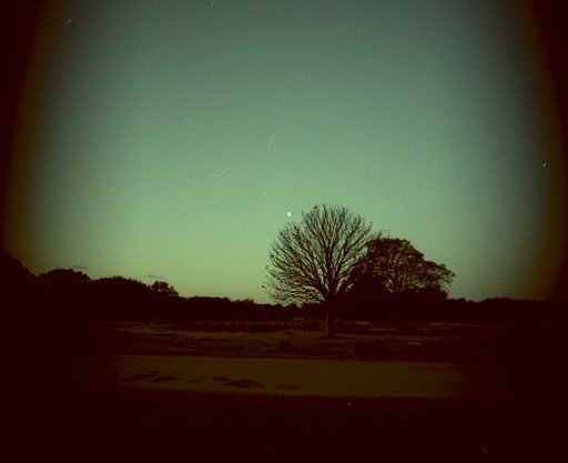 Richmond Park at Dusk