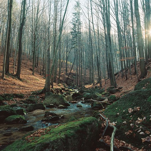 A Walk in the Woods - a Photo Gallery by @smolda