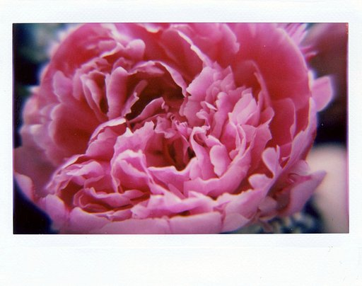 Blumige close ups mit der Lomo Instant Wide