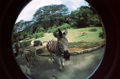 Taman Safari Zoo, Indonesia
