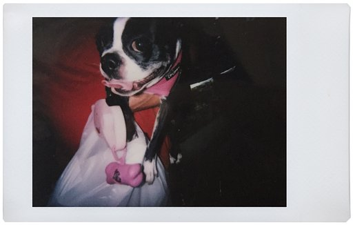 Lomo'Instant: How to Make Instant Connections