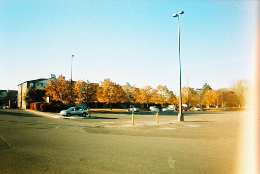 Autumn Leaves All Around: My Lomographic History with Fallen Leaves