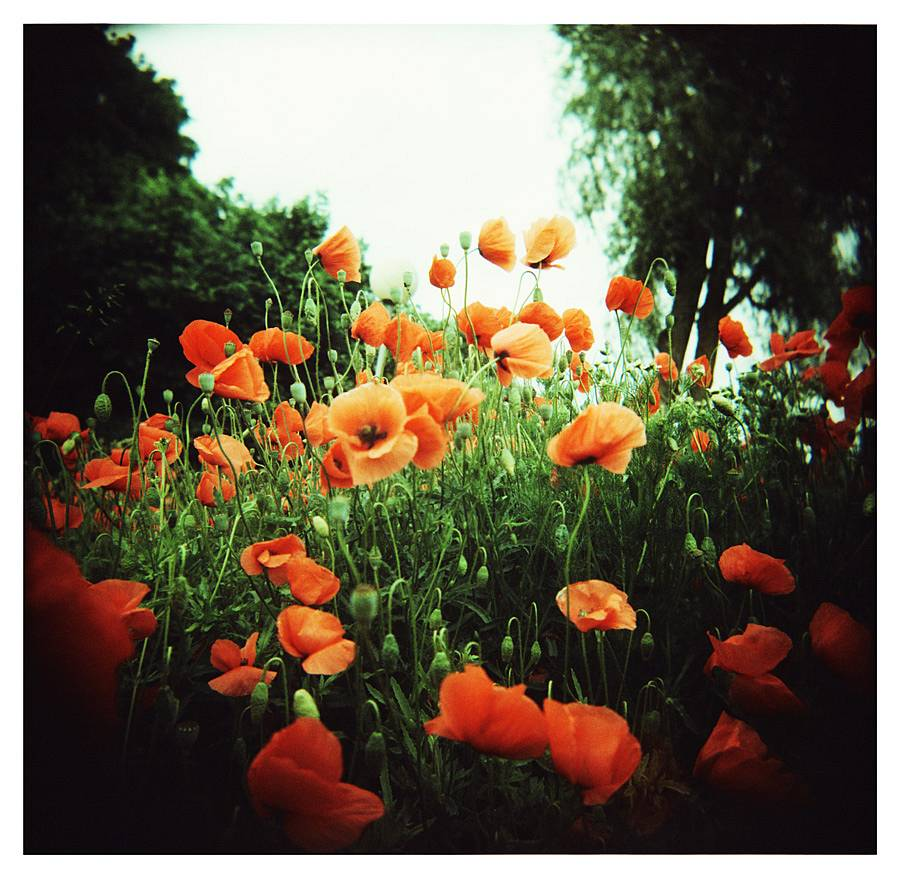 Pearlgirl77 is our LomoHome of the Day!