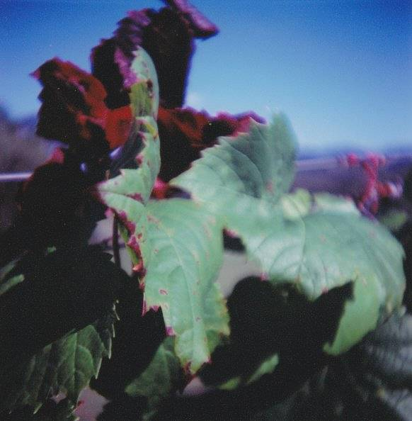 Diana F+ 55mm Wide Angle and Close Up Lenses: Deliciously Wide and Deliciously Close