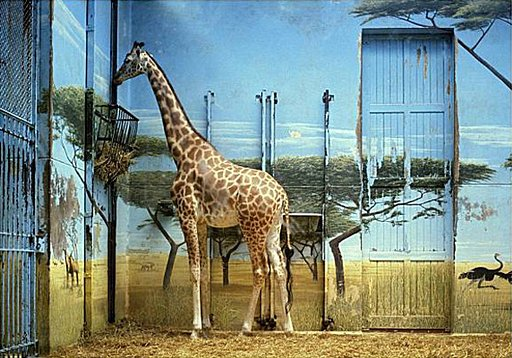 To the Zoo with Candida Höfer