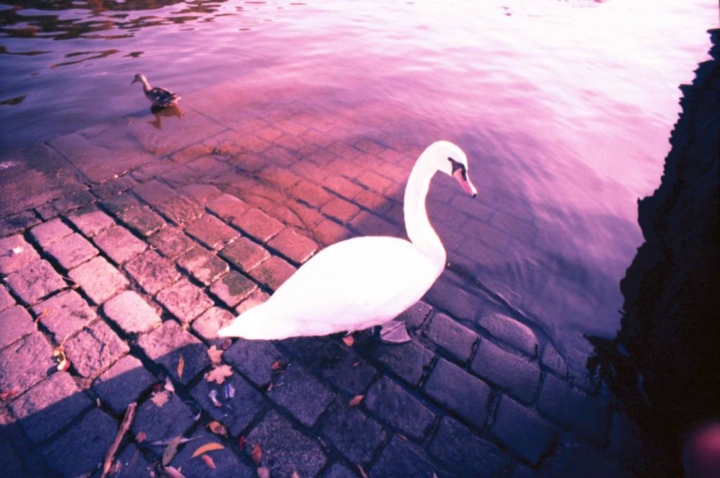 The Stories Within Pictures #15: The Swan Dream