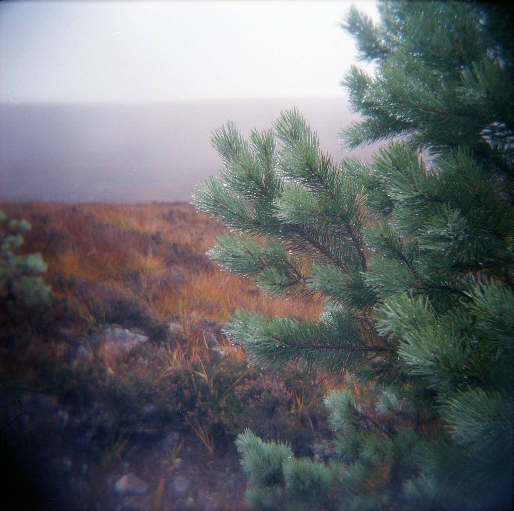 Make the Most of 120 Film: Take it Outside!