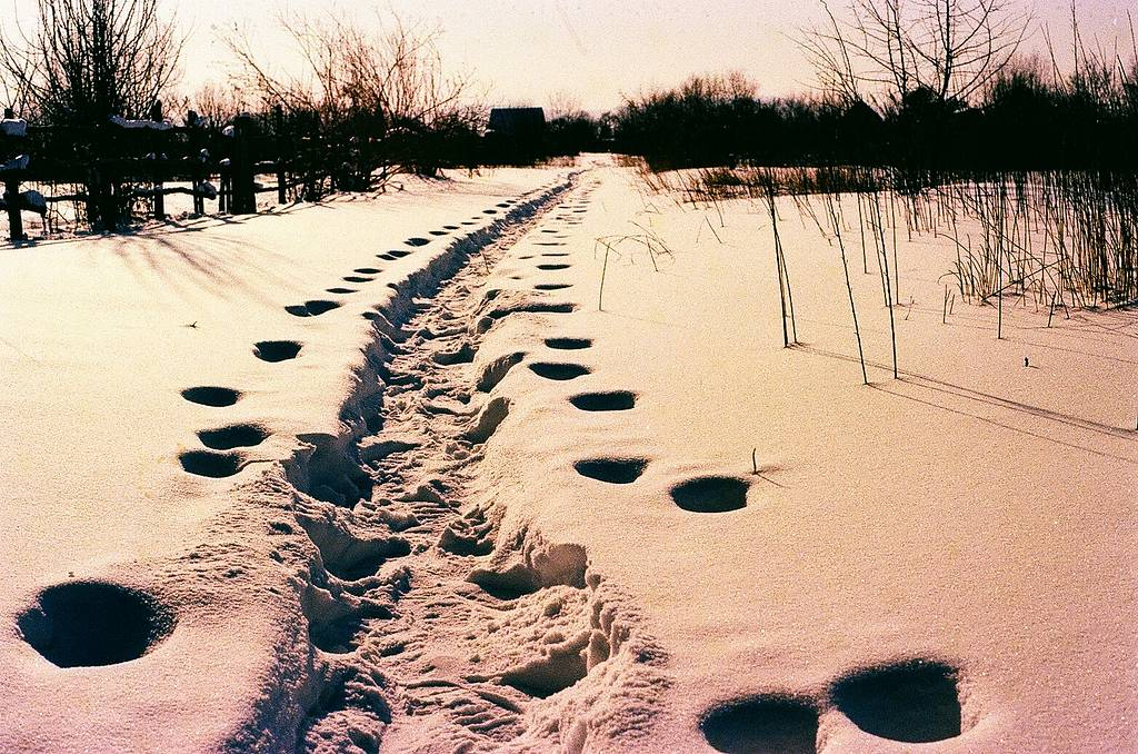 From Russia With Love: A Gallery of Photos From Russian Lomohomes